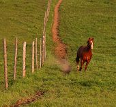 Stallion runs downhill away from the muddied path. poster