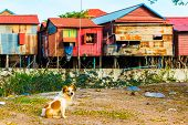 Poor houses and huts in Phnom Krom village, Siem Reap in Cambodia poster