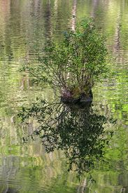 Cypress Knee With Emerging Vegetation In Rippling Waters Of Mountain Fork River, Southeast Oklahoma