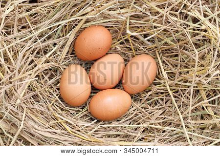 Many Brown Eggs On Rice Straw.the Benefits Of Egg Are Rich In Vitamins And Minerals Of Various Types