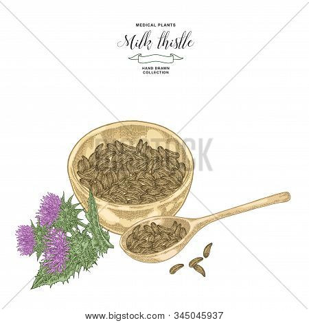 Milk Thistle Plant Hand Drawn. Thistle Flowers And Seeds With Wooden Bowl. Medicinal Gerbs Collectio