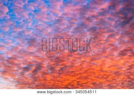 Colorful Orange Clouds Altocumulus On Evening Sky. Sunset Scenery