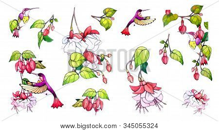 Collection Floral, Botanical Vector Stock Illustration In Vintage, Watercolor Style On Isolated Back
