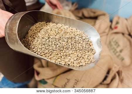 Coffee trader showing the raw product in a shovel