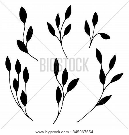Set Of Ornamental Leaves, Twigs In Doodle Style. Hand Drawn Illustrations On White Background. Black