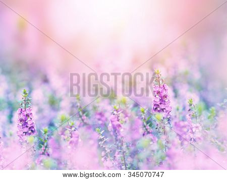 Abstract Floral Background Of Purple Flowers Field Over Pastel Colors With Soft Style For Spring Or