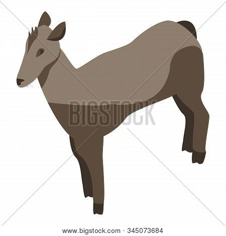 Animal Female Deer Icon. Isometric Of Animal Female Deer Vector Icon For Web Design Isolated On Whit