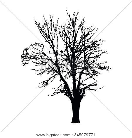 Realistic Tree Silhouette Isolated On White Background. Black Large Dried Tree With Bare Branches Wi