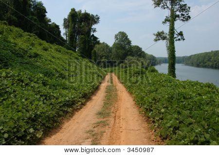 Along The Kudzu Path