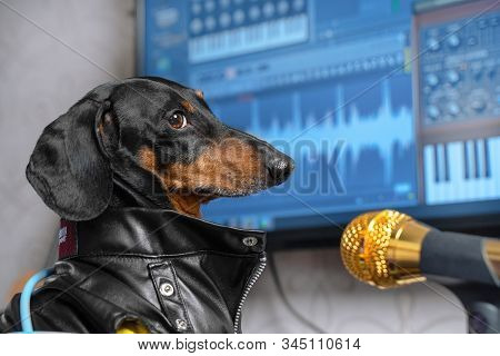The Lovely Awesomeness Black And Tan Dachshund Dog In Leather Jacket Is Singing A Song With A Gold M