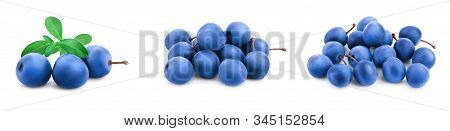 Blackthorn Or Sloe Berries With Leaves Isolated On White Background. Prunus Spinosa. Set Or Collecti