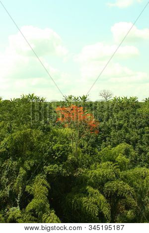 Panoramic View Of A Tropical Forest, Between The Andes Mountain Ranges. Green Jungle Landscape. Sier