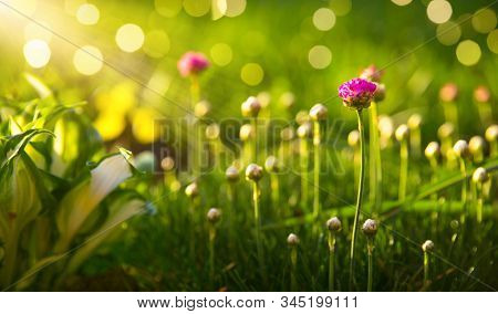 Sunny with flowers shallow depth of field with bokeh. Summer landscape with plant in garden at lawn.