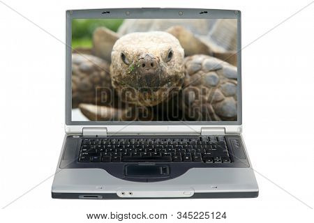 Laptop Computer. Tortoise aka Land Turtle close up on a Computer Screen. Isolated on white. Room for text. Clipping Path. Turtles and Tortoises love to roam about looking for food and other turtles.