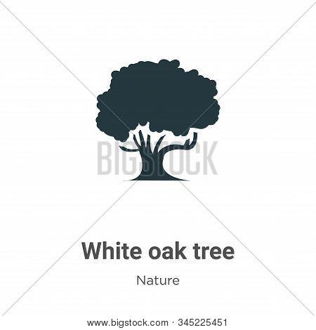 White Oak Tree Vector Icon On White Background. Flat Vector White Oak Tree Icon Symbol Sign From Mod