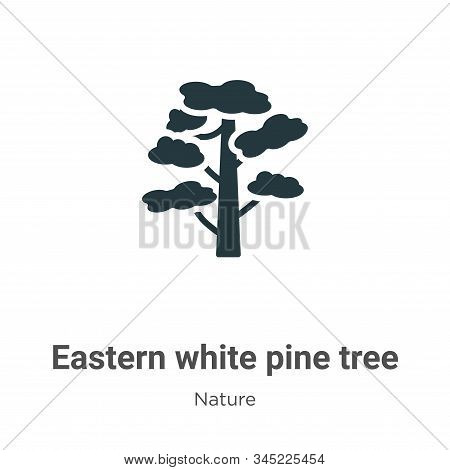 Eastern white pine tree icon isolated on white background from nature collection. Eastern white pine