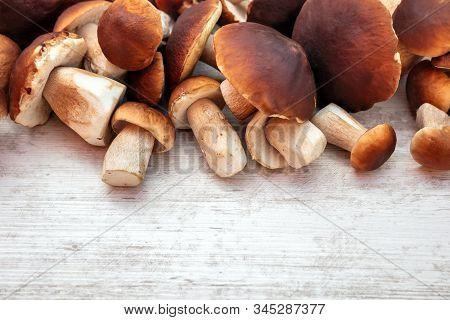 Gourmet Fungi Boletus Edulis On Wooden Table With Copyspace, Fresh And Raw Porcini Mushrooms