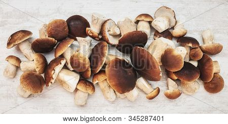 Header Of A Lots Of Fresh Raw Porcini Mushrooms On Wooden Table, Boletus Edulis, Topview
