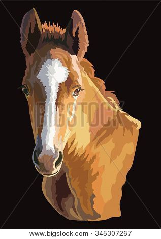 Colorful Cute Pony Foal Portrait. Young Pony Head  Isolated On Black Background. Vector Drawing Illu