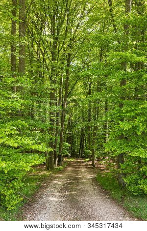 Gravel country road thru green forest  in rural Bavaria, Germany