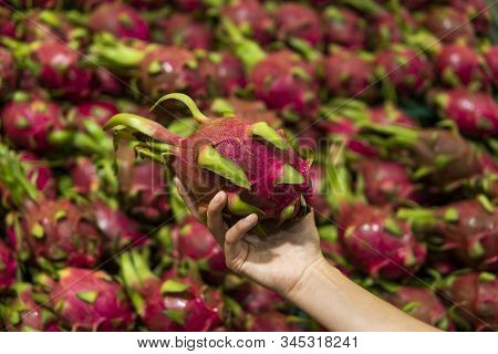 Male Hands Holding A Dragon Fruit With A Lots Of Dragon Fruit On A Background. Dragon Fruit Or Pitay