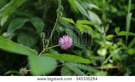 Beautyfull Pink Flower And The Blured Leafs