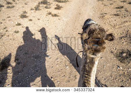 Shadows Of Dromedary Camel Caravan On The Desert Agafay, Morocco