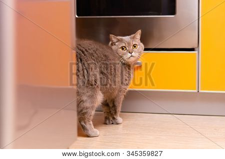 Funny Cat, Looking Furtively, Is Standing In The Kitchen In Such A Pose As If It Leaves An Odor Mark