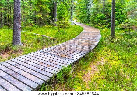 Autumn Forest Walk. Touristic Wooden Plank Path