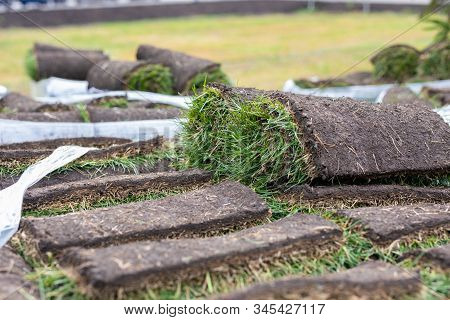 Turf Grass Roll, Green Grass Carpet In Roll For Lawn. Stack Of Turf Grass Rolls For Landscaping