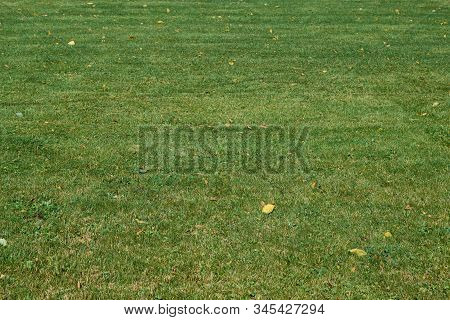 The Surface Of A Lawn Or Lawn With Trimmed Green Grass. A Few Yellowed Autumn Leaves Lie On The Gras