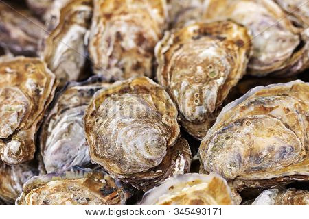 Raw Uncooked Oysters For Sale At Fish Market. Sea Food, Shellfish Market. Stock Photo Oysters As Foo