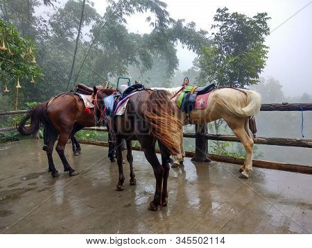 Horse Ride Through Jungle In Vacation. Horse In Stall. Brown Horse Portrait. Horses. Riding A Horse.
