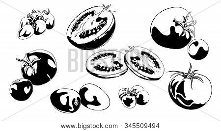 Tomato Vector Drawing Set. Isolated Tomato, Sliced Piece And Tomato Sauce. Vegetable Engraved Style