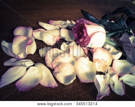 Flowers Composition. Rose Lying Down On A Wooden Floor. Beautiful Single White With Pink Rose Lying