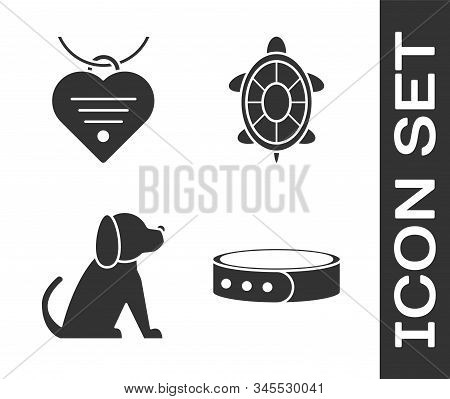 Set Collar With Name Tag, Collar With Name Tag And Heart, Dog And Turtle Icon. Vector