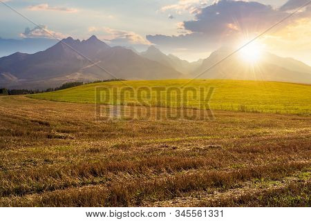 Rural Landscape Of Slovakia In Summer At Sunset. Empty Wheat Field In August. High Tatras Mountain R