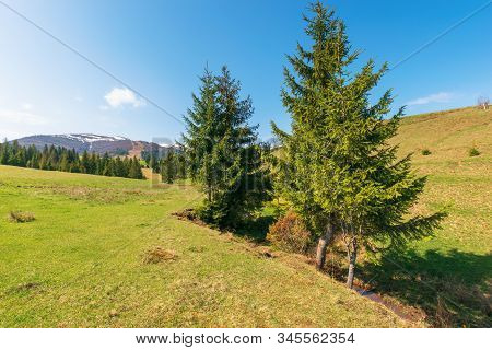 Mountainous Countryside In Springtime. Spruce Trees On The Grassy Hills. Spots Of Snow On The Distan