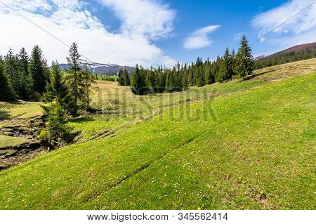 Meadow And Forest In Mountains On A Sunny Day. Snow Capped Ridge In The Distance. Wonderful Springti