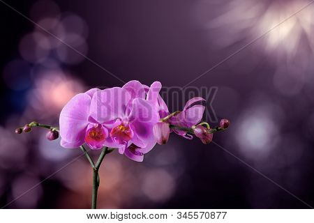 Orchid Flower On A Blurred Purple Background. Valentine Greeting Card. Love And Passion Concept. Bea