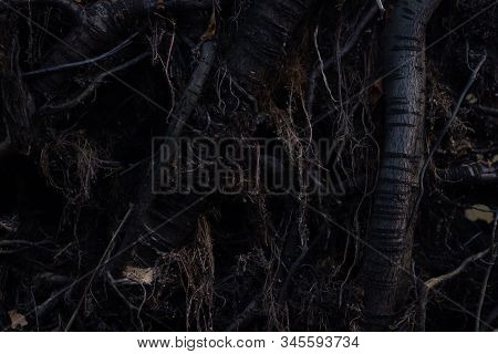 Close Up Roots With Fertile Soil Background. Dark Abstract Mistic Fairytale Backgrounds