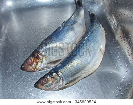 Undivided Lightly Salted Pacific Herring. Natural And Healthy Product. Pacific Herring Has A High Io