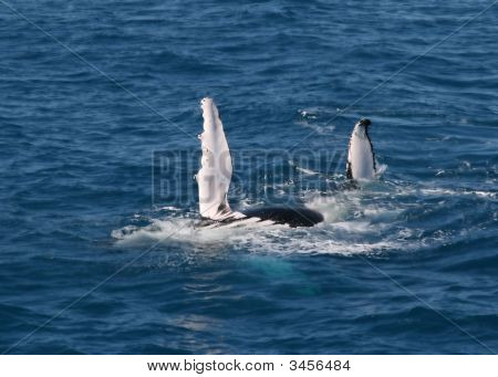 Whale Flippers