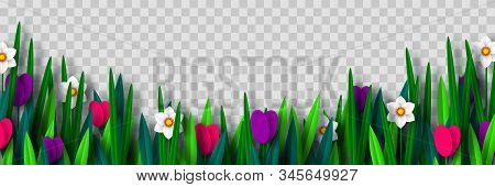 Vector Spring Flower Border With Tulips And Narcissus, Isolated On Transparent Background. Paper Cut