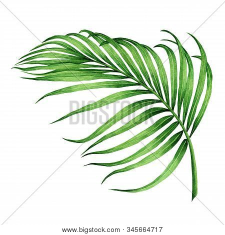 Watercolor Painting Coconut, Palm Leaf,green Leave Isolated On White Background.watercolor Hand Pain