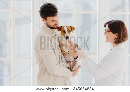 Horizontal Shot Of Caring Dog Owner Carries Pet On Hands, Shows To Animal Specialist. Jack Russell T