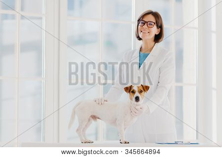 Pedigree Dog Russell Terrier Examined And Consulted By Veterinarian, Pose Near Examination Table In
