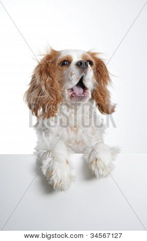 Doggie Advertisement