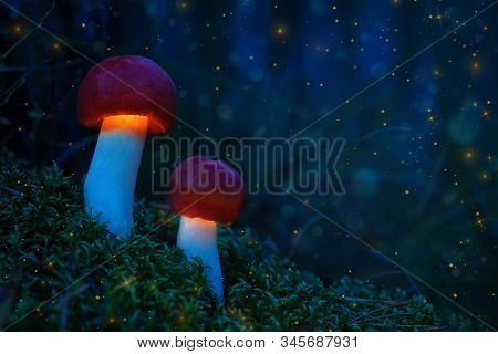 A Fabulous World Of Glowing Mushrooms. Glowing Mushrooms In The Night Forest