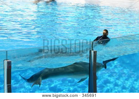 dolphins pushing a girl along in the pool poster